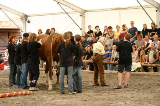 Horse Seminar at the new Slovenian TTEAM center. I'm explaining what 6 of Darja's students are doing with their TTouches on this mare, Izi, who was rescued by Darja because she was said to be so agressive.