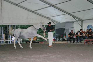 Andre Znidersic presenting the Spanish walk with the Lippizaner stallion while the orchestra plays in the background.