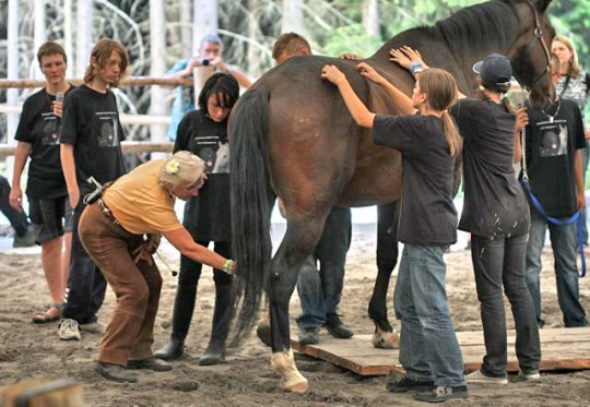 by getting lots of TTouches and quiet hands on this gelding we can help get him to be aware of his body, get grounded, and feel safe. These teenagers have had years of TTouch and know how to give a sense of confidence and love with their hands. This is a horse that Darja rescued and I think the was afraid he was being sent away by trailer.