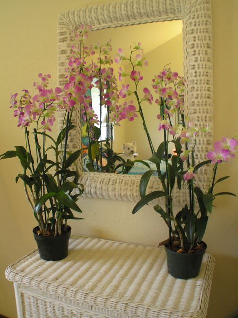 Orchids from the local farmers' market adorn the dresser. You can see my wise and faithful companion, Rayne in the mirror!