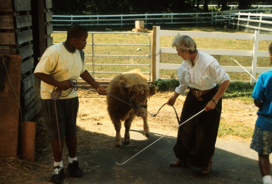 I am working with a calf and a student at Green Chimneys