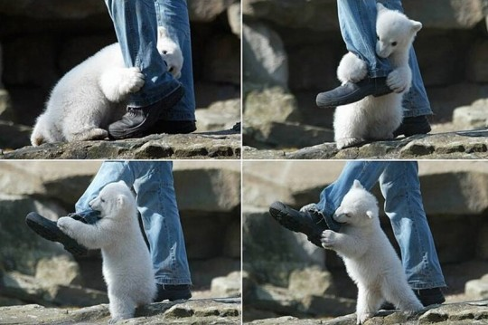 polar bear attack, Changing the World One TTouch At A Time, Linda Tellington-Jones