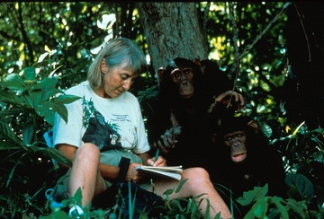 Journaling with chimps in Zambia